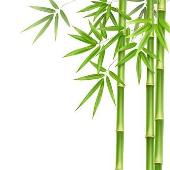 Bambusz paplan, párna